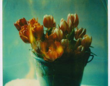 Tulpen aus Amsterdam 2007
